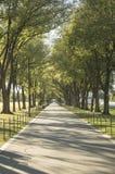 灰森林公园 免版税库存图片
