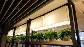 灰毛紫穗槐成长在商业大厦的灯幼木 免版税图库摄影