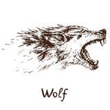 灰狼北美灰狼或西部狼嗥叫面孔,与锋利的犬的开放嘴 向量例证