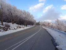 灰白在亚斯本焕发2的结霜的橡树 图库摄影