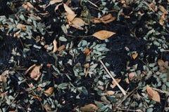 灰的叶子在火以后的 库存图片