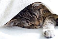 灰色休息和睡觉在白色毛巾下的平纹幼小猫 免版税库存照片