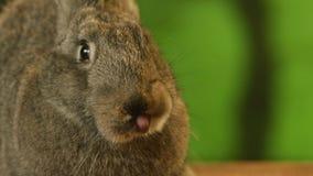 灰色兔子嗅arround 股票录像