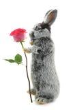 灰色兔子 库存照片