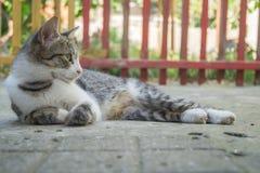 灰色典雅的年轻猫休息 免版税库存照片