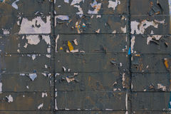灰色削皮砖墙在春天 免版税库存照片