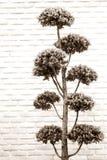 灰色口气灌木盆景树 免版税库存照片