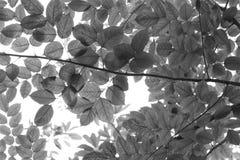 灰色叶茂盛背景 免版税图库摄影