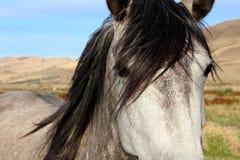 灰色和白马 免版税库存照片