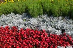 灰色和红颜色花床  免版税图库摄影