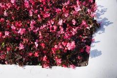 灰色和红颜色花床  库存图片