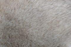 灰色多壳的头发纹理背景 库存图片