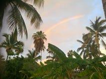 灰色天空热带彩虹 库存图片
