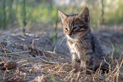 灰色小小猫 库存图片