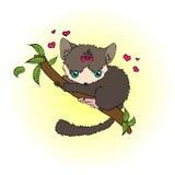 灰色小狐猴 库存图片