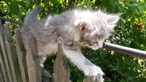 灰色小猫在篱芭上升 小的小猫在篱芭使用 库存图片