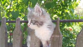 灰色小猫在篱芭上升 小的小猫在篱芭使用 免版税库存图片
