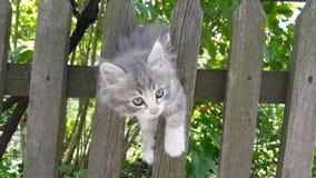 灰色小猫在篱芭上升 小的小猫在篱芭使用 图库摄影