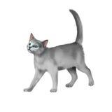 灰色小猫走反对白色背景 图库摄影