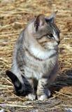 灰色小猫 免版税图库摄影