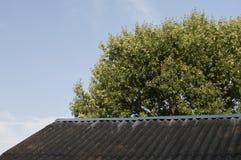 灰色屋顶和绿色橡树 免版税库存图片