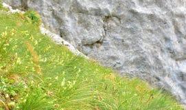 灰色岩石和灰色草背景的 免版税库存照片