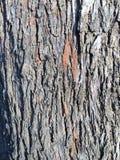 灰色木头构造细节 库存图片