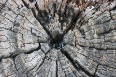 灰色树桩 免版税库存照片