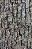 灰色树皮背景 免版税图库摄影