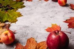 灰色混凝土用苹果和槭树叶子 免版税库存照片