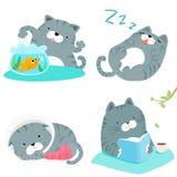 灰色猫品种行动组装例证 免版税图库摄影
