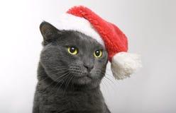 灰色猫圣诞老人-圣诞节猫 库存照片