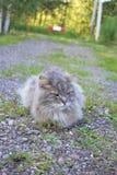 灰色猫在乡下公路说谎 免版税图库摄影