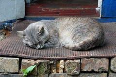 灰色猫在房子的门阶睡觉在门户开放主义 免版税图库摄影