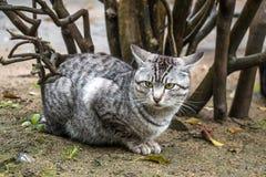 灰色猫坐观看她的区域的草甸 免版税库存照片