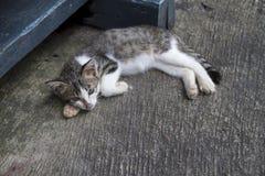 灰色猫睡眠 库存图片