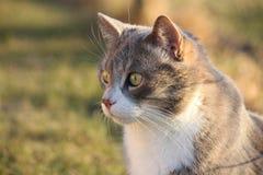 灰色猫纵向在庭院里 库存图片