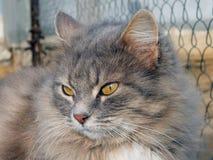 灰色猫画象 库存图片