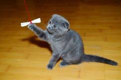 灰色猫 库存照片