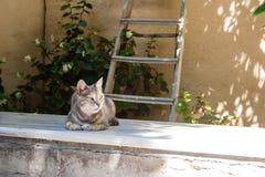 灰色猫Portait在希腊 库存图片