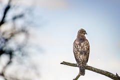 灰色用羽毛装饰的鸟 库存照片
