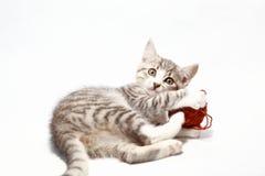 灰色的猫一点 免版税库存照片