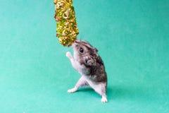 灰色矮小的仓鼠 库存图片