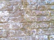 灰色砖和真菌纹理 库存照片