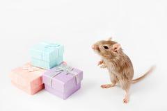 灰色老鼠和沙鼠箱子 库存图片