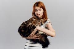 灰色背景的年轻美丽的妇女拿着一只猫,宠物 库存图片