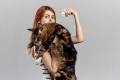 灰色背景的年轻美丽的妇女拿着一只猫,缅因浣熊 免版税库存照片