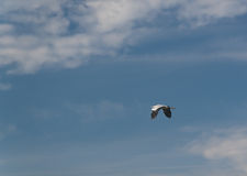 灰色苍鹭-迁移到冬季 免版税库存图片