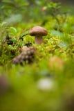 灰色蘑菇 免版税图库摄影