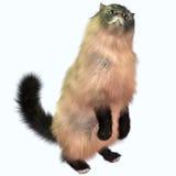 灰色虎斑猫 库存照片